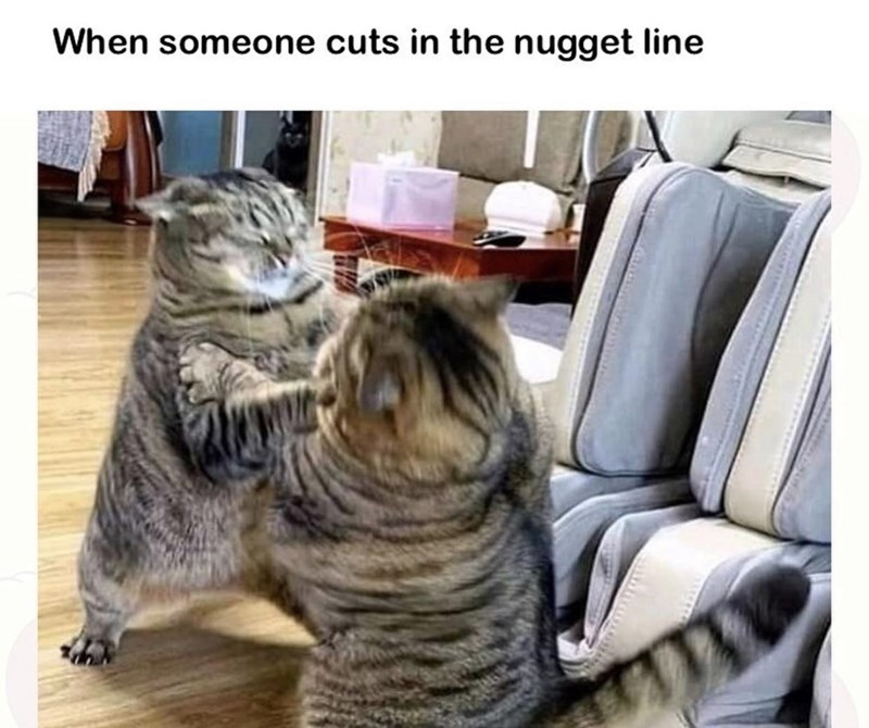 Cat - When someone cuts in the nugget line