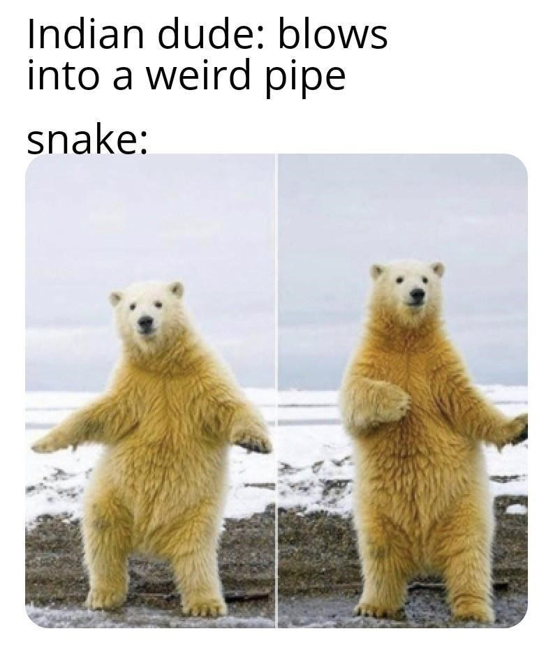 Vertebrate - Indian dude: blows into a weird pipe snake: