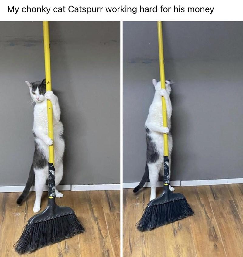 Floor - My chonky cat Catspurr working hard for his money