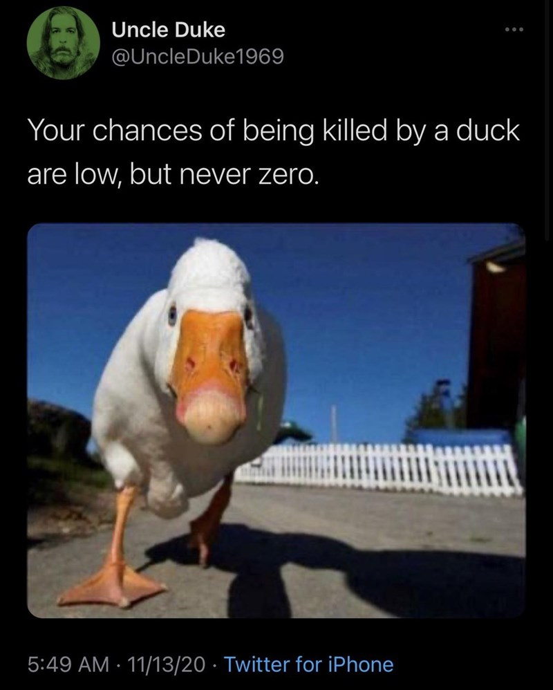 Photo caption - Uncle Duke @UncleDuke1969 Your chances of being killed by a duck are low, but never zero. 5:49 AM · 11/13/20 · Twitter for iPhone