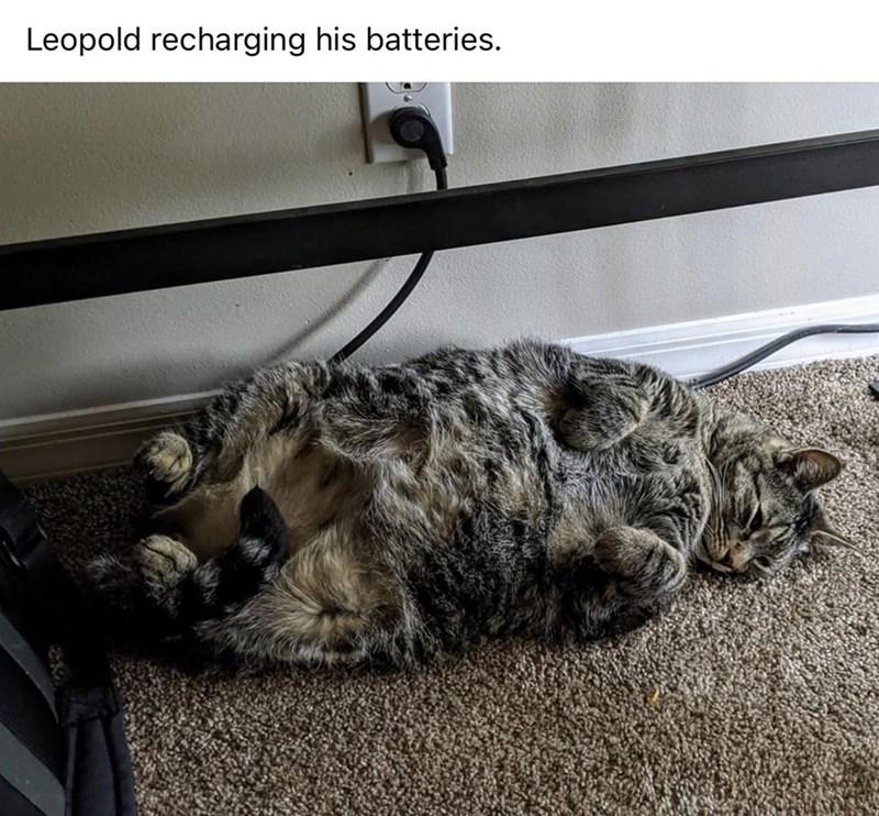 Cat - Leopold recharging his batteries.