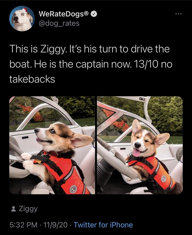 Canidae - WeRateDogs® O @dog_rates This is Ziggy. It's his turn to drive the boat. He is the captain now. 13/10 no takebacks 8 Ziggy 5:32 PM · 11/9/20 · Twitter for iPhone