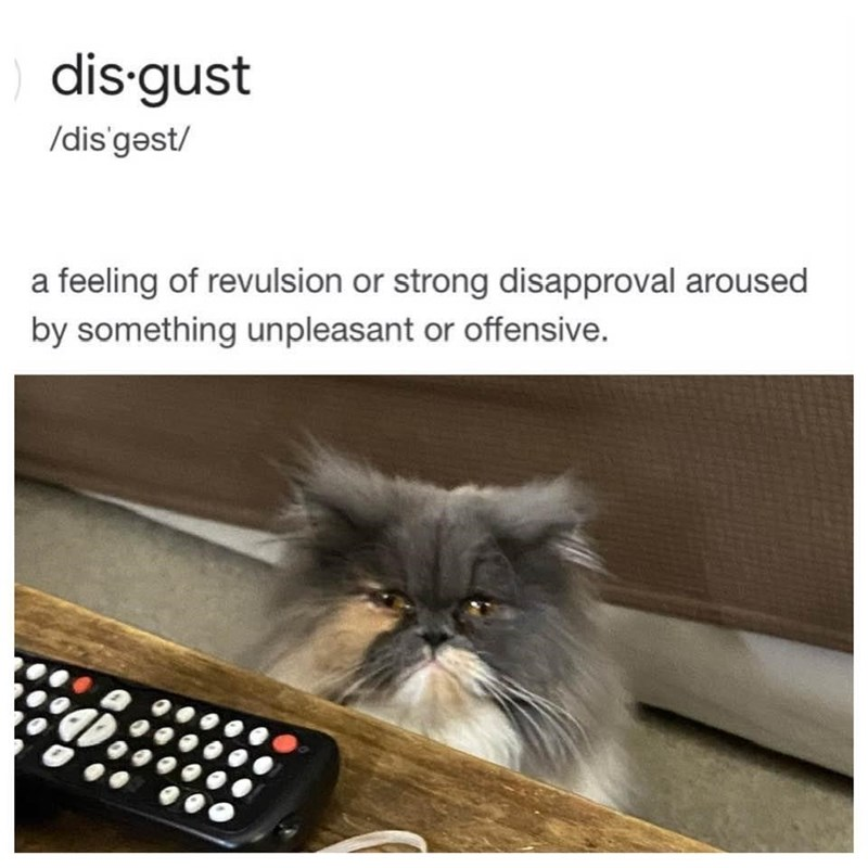 Cat - dis gust /dis'gəst/ a feeling of revulsion or strong disapproval aroused by something unpleasant or offensive.