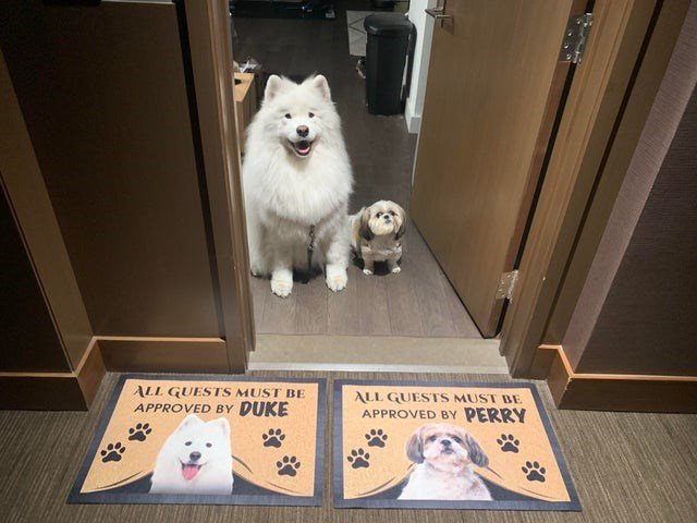 two cute dogs one big and fluffy one small standing at a door in front of two door mats | all guests must be approved by duke and perry