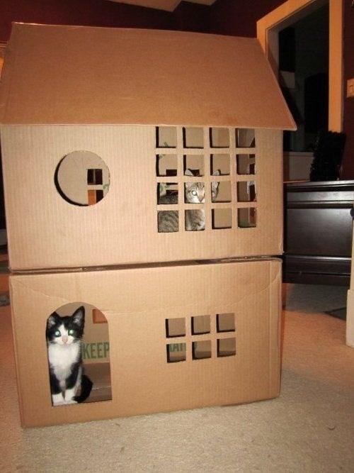 Cat - LLLL LI KEEP