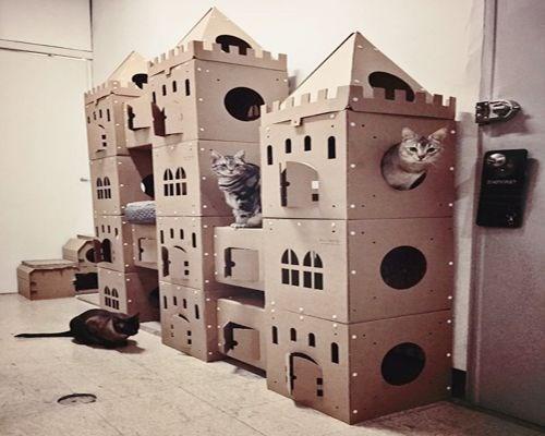 Cardboard - AA III STHVARY