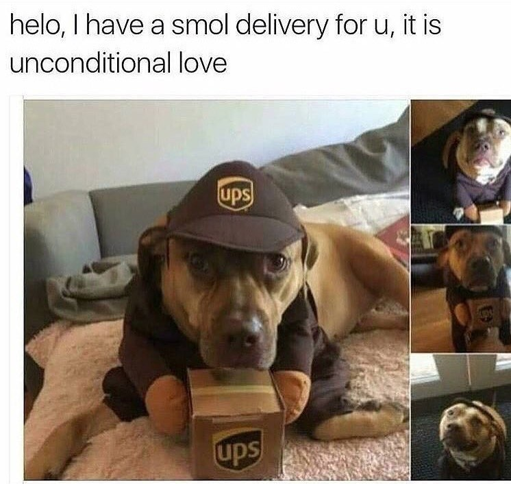 helo, I have a smol delivery for u, it is unconditional love | cute dog in ups uniform with a package