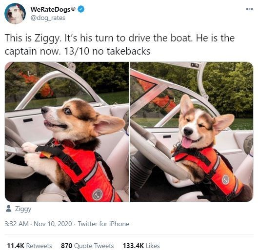 Canidae - WeRateDogs® @dog_rates 000 This is Ziggy. It's his turn to drive the boat. He is the captain now. 13/10 no takebacks Ziggy 3:32 AM - Nov 10, 2020 - Twitter for iPhone 11.4K Retweets 870 Quote Tweets 133.4K Likes
