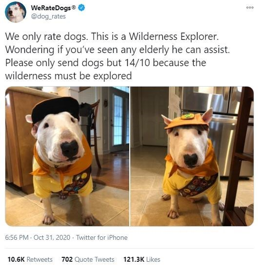 Dog - WeRateDogs® @dog_rates 000 We only rate dogs. This is a Wilderness Explorer. Wondering if you've seen any elderly he can assist. Please only send dogs but 14/10 because the wilderness must be explored 6:56 PM · Oct 31, 2020 · Twitter for iPhone 10.6K Retweets 702 Quote Tweets 121.3K Likes