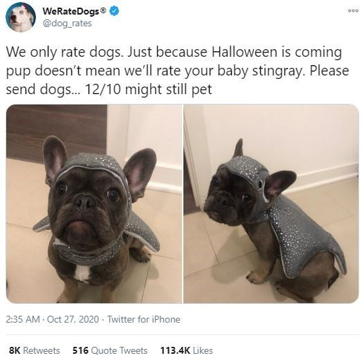 French bulldog - WeRateDogs® @dog_rates 000 We only rate dogs. Just because Halloween is coming pup doesn't mean we'll rate your baby stingray. Please send dogs. 12/10 might still pet 2:35 AM Oct 27, 2020 · Twitter for iPhone 8K Retweets 516 Quote Tweets 113.4K Likes
