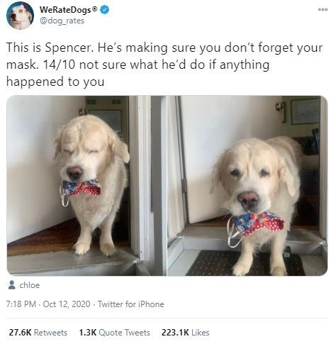 Dog breed - WeRateDogs @dog_rates This is Spencer. He's making sure you don't forget your mask. 14/10 not sure what he'd do if anything happened to you chloe 7:18 PM - Oct 12, 2020 - Twitter for iPhone 27.6K Retweets 1.3K Quote Tweets 223.1K Likes