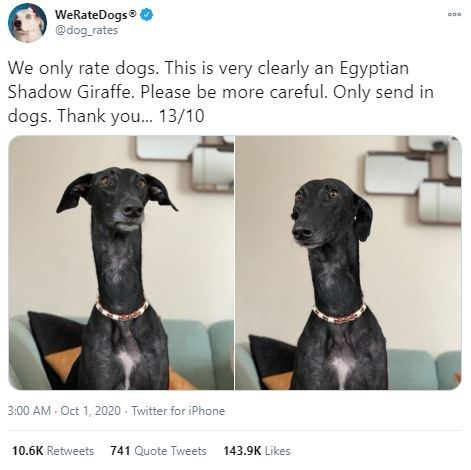 Dog - WeRateDogs ® @dog_rates We only rate dogs. This is very clearly an Egyptian Shadow Giraffe. Please be more careful. Only send in dogs. Thank you. 13/10 3:00 AM - Oct 1, 2020 - Twitter for iPhone 10.6K Retweets 741 Quote Tweets 143.9K Likes