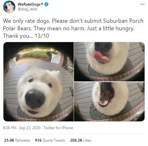 Nose - WeRateDogs @dog_rates We only rate dogs. Please don't submit Suburban Porch Polar Bears. They mean no harm. Just a little hungry. Thank you.. 13/10 9:38 PM - Sep 23, 2020 - Twitter for iPhone 25.9K Retweets 916 Quote Tweets 208.3K Likes