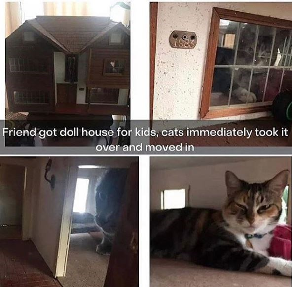 Cat - 1983 Friend got doll house for kids, cats immediately took it over and moved in