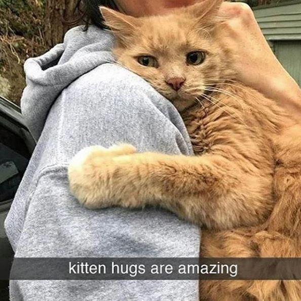 Cat - kitten hugs are amazing