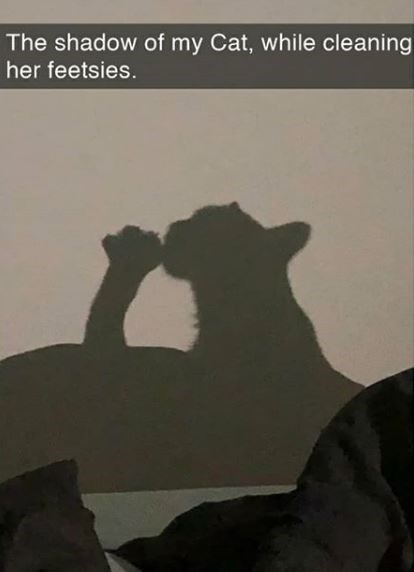 Text - The shadow of my Cat, while cleaning her feetsies.