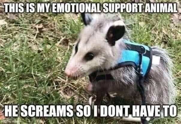 Vertebrate - THIS IS MY EMOTIONAL SUPPORT ANIMAL HE SCREAMS SO I DONT HAVE TO imuflip.com