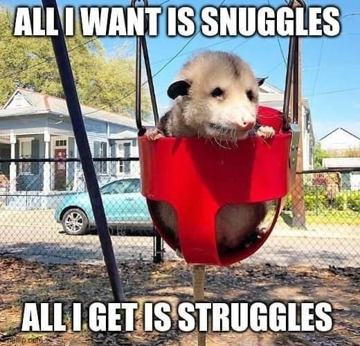 Photo caption - ALL IWANT IS SNUGGLES ALL I GET IS STRUGGLES