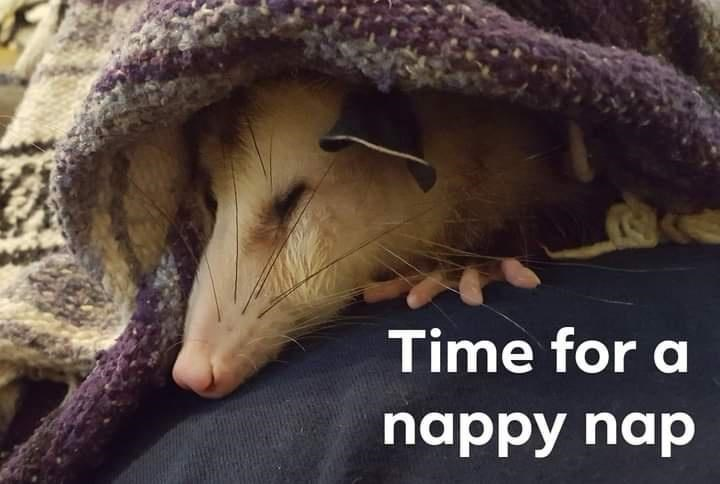 Reptile - Time for a nappy nap