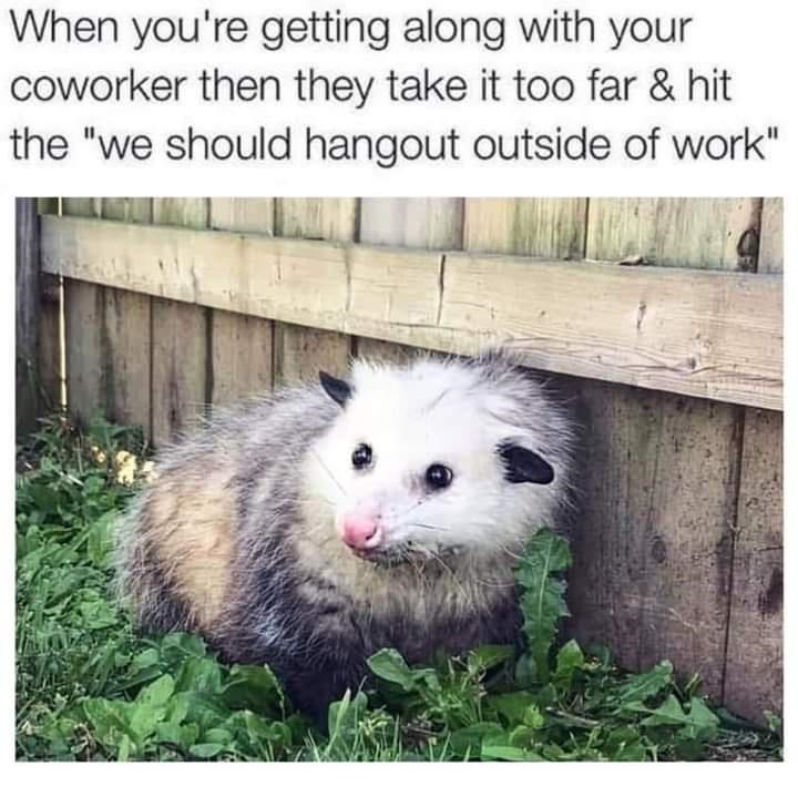 """Mammal - When you're getting along with your coworker then they take it too far & hit the """"we should hangout outside of work"""""""