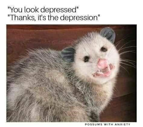 """Vertebrate - """"You look depressed"""" """"Thanks, it's the depression"""" POSSUMS WITH ANXIETY"""