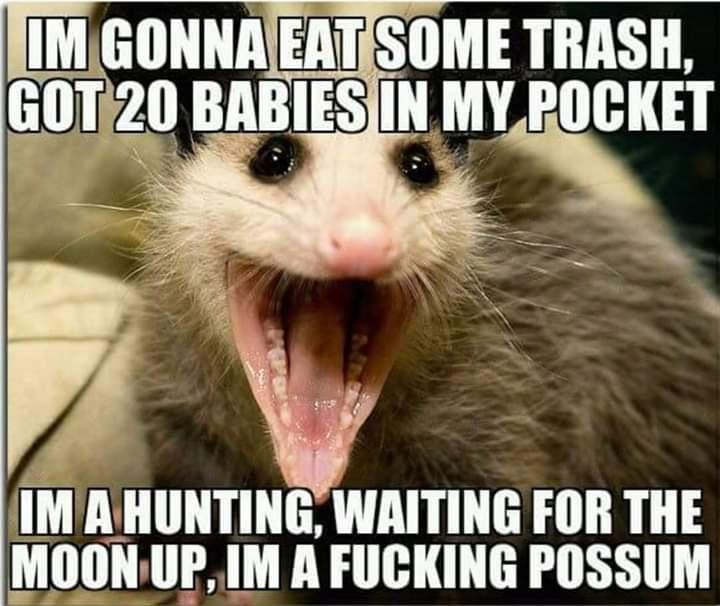 Vertebrate - IM GONNA EAT SOME TRASH, GOT 20 BABIES IN MY POCKET IM A HUNTING, WAITING FOR THE MOON UP, IM A FUCKING POSSUM