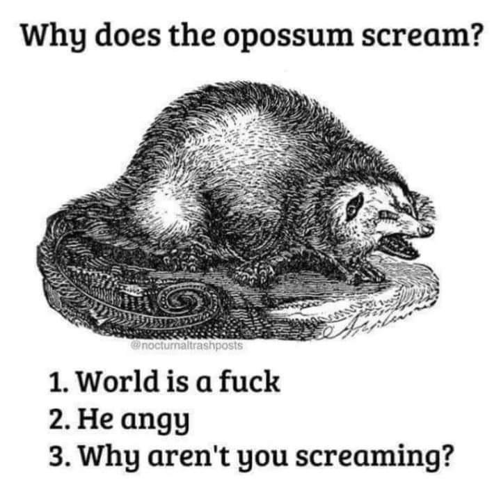 Head - Why does the opossum scream? nocturnaltrashposts 1. World is a fuck 2. He angy 3. Why aren't you screaming?