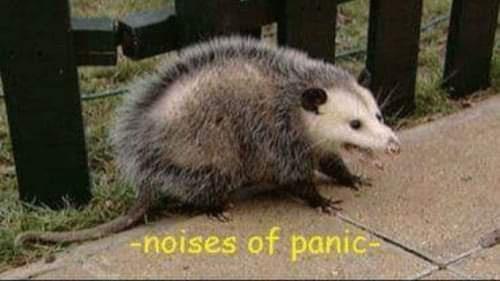 Mammal - noises of panic-