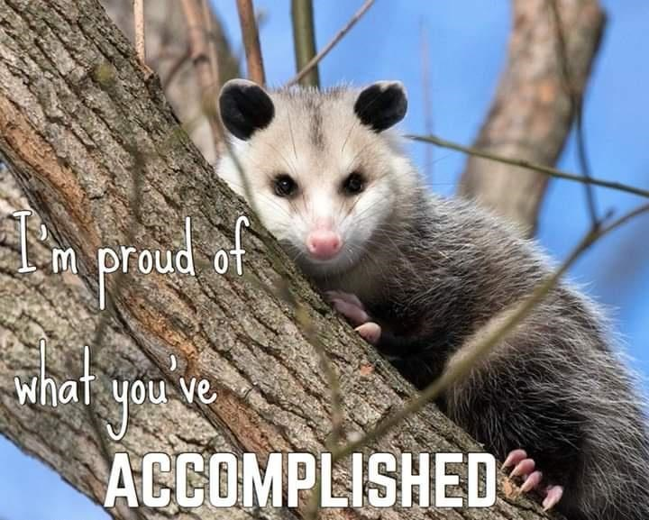 Mammal - m proud of what you ve ACCOMPLISHED
