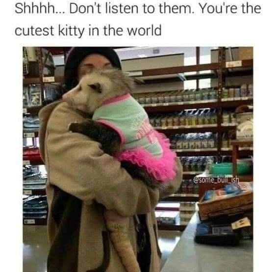 Product - Shhhh. Don't listen to them. You're the cutest kitty in the world TTIT @some bulil ish