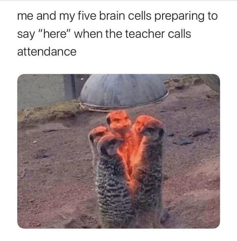 """Text - me and my five brain cells preparing to say """"here"""" when the teacher calls attendance"""