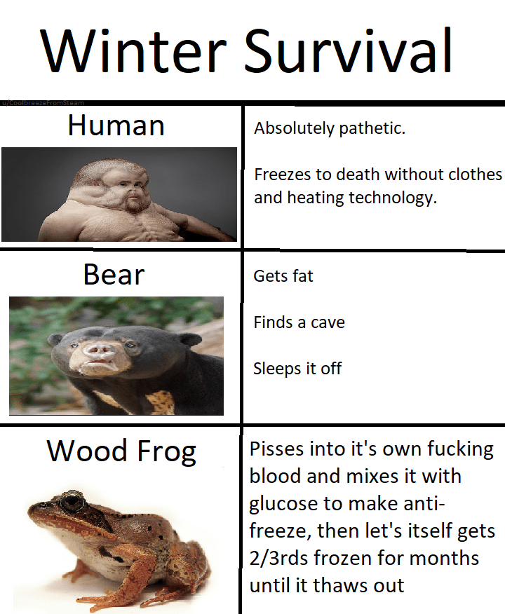 Amphibian - Winter Survival u/Col Human Absolutely pathetic. Freezes to death without clothes and heating technology. Вear Gets fat Finds a cave Sleeps it off Wood Frog Pisses into it's own fucking blood and mixes it with glucose to make anti- freeze, then let's itself gets 2/3rds frozen for months until it thaws out