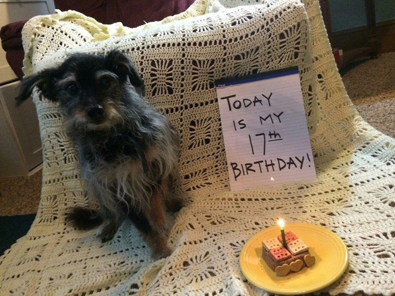 Canidae - TODAY IS MY 17th BIRTH DAY! INE
