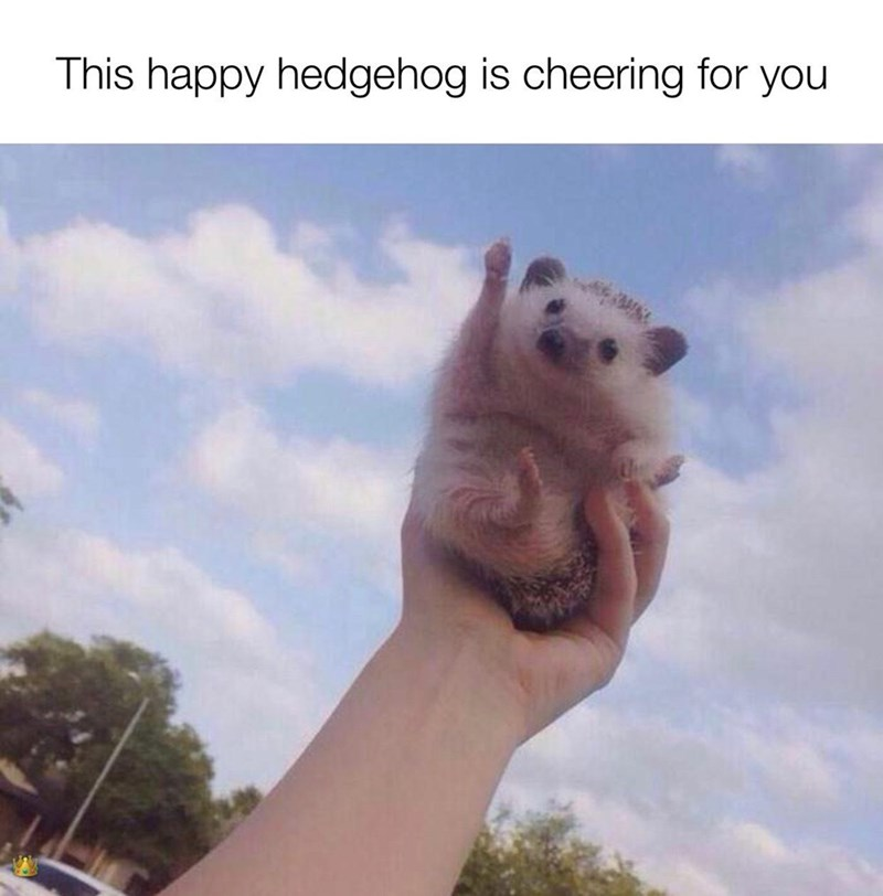 Sky - This happy hedgehog is cheering for you