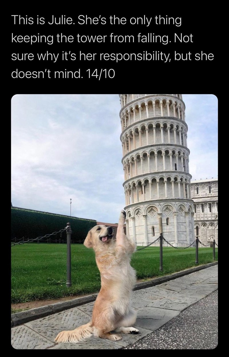 Dog - This is Julie. She's the only thing keeping the tower from falling. Not sure why it's her responsibility, but she doesn't mind. 14/10