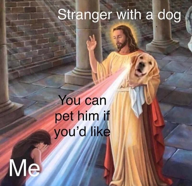 Text - Morning - Stranger with a dog You can pet him if you'd like Me