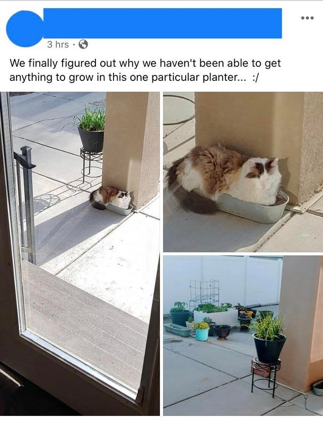 Product - 3 hrs · We finally figured out why we haven't been able to get anything to grow in this one particular planter... :/