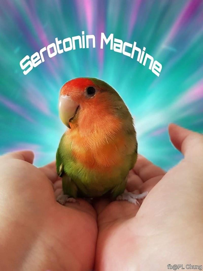 Lovebird - serotonin Machine fb@PL Chung