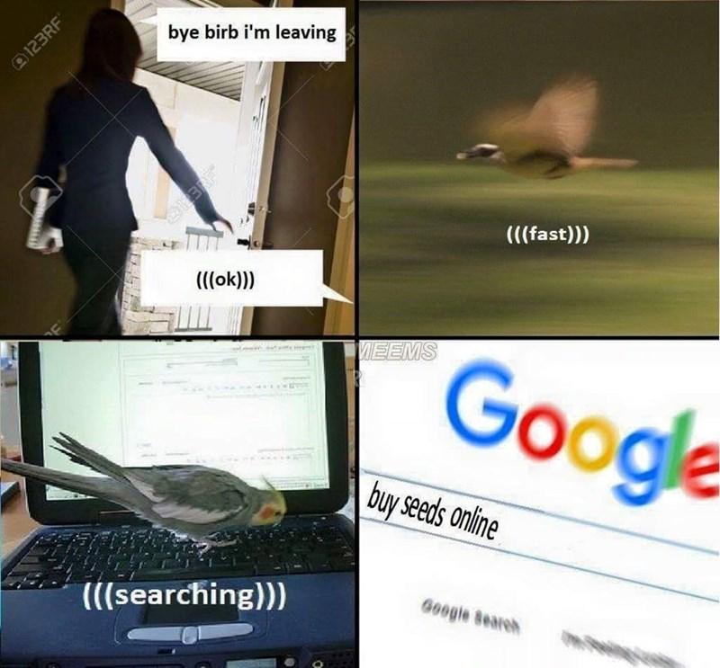 Technology - bye birb i'm leaving (((fast))) (((ok)) VEEMS Google buy seeds online Google Beareh (((searching))) @123RF®