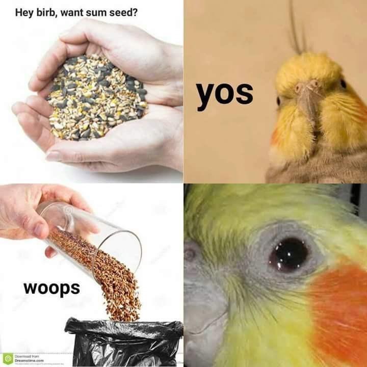 Bird food - Hey birb, want sum seed? yos woops Dow n Dremstana.com
