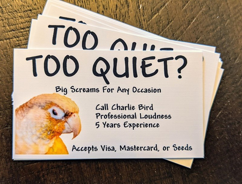 Text - TOO n TOO QUIET? Big Screams For Any Occasion Call Charlie Bird Professional Loudness 5 Years Experience Accepts Visa, Mastercard, or Seeds