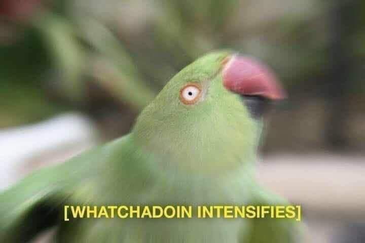 Bird - [WHATCHADOIN INTENSIFIES]