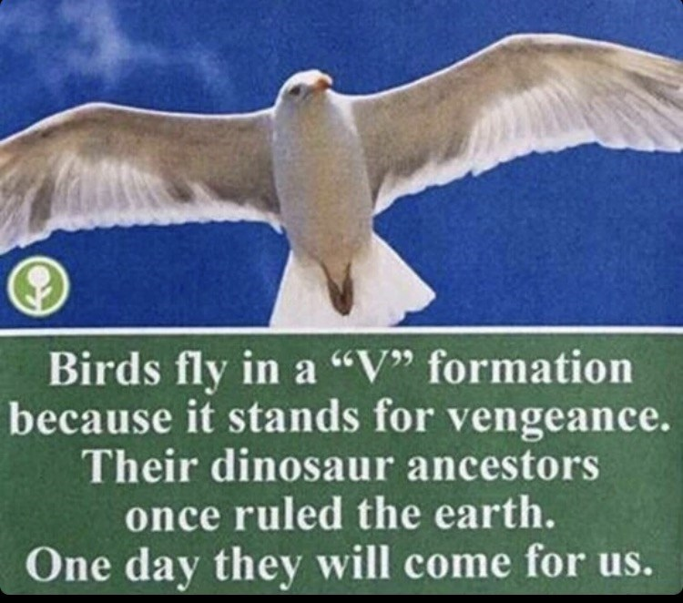 """Bird - Birds fly in a """"V"""" formation because it stands for vengeance. Their dinosaur ancestors once ruled the earth. One day they will come for us."""