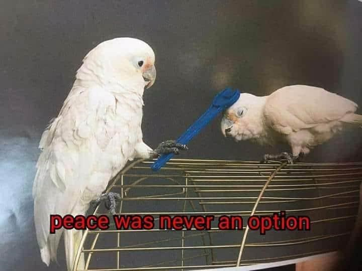 Bird - peace was neveran option
