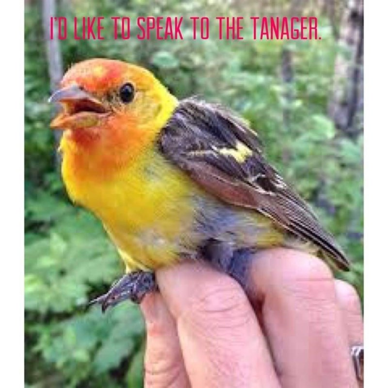 Bird - ID LIKE ED SPEAK TO THE TANAGER.