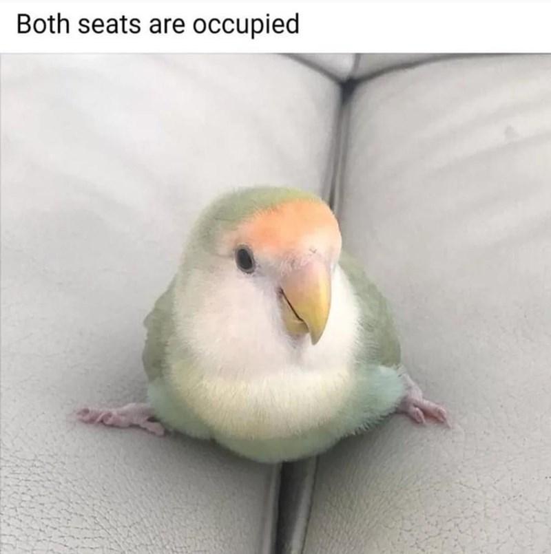 Bird - Both seats are occupied