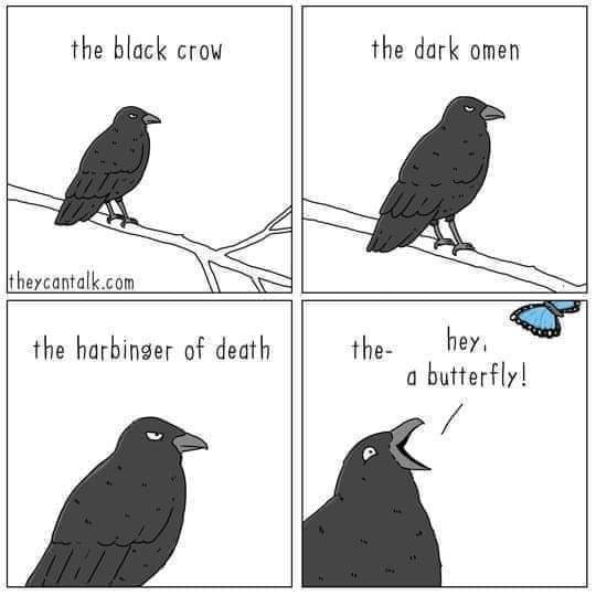Bird - the black crow the dark omen theycantalk.com the harbinger of death the- hey. a butterfly!