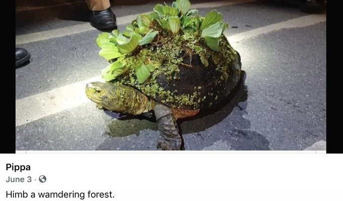 Himb a wamdering forest | big tortoise with plants and leaves growing on top of its shell