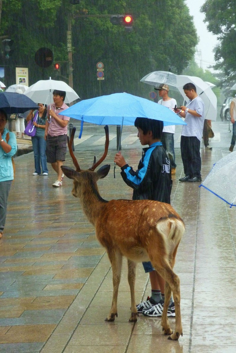 picture of people out in the rain with one person sharing an umbrella with a deer