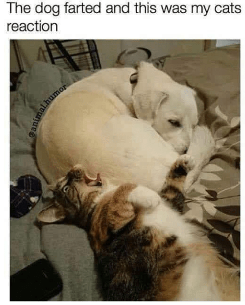 Photo caption - The dog farted and this was my cats reaction mal.humor